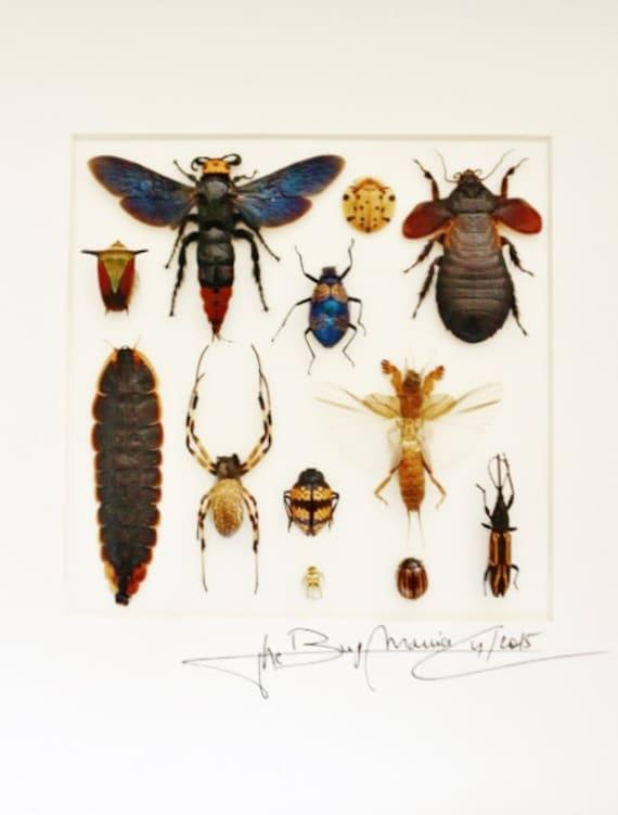 Artframe con insectos reales: marco insectos de alta calidad | Etsy