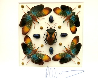 Shadowbox taxidermy : Fantasy with lantern bugs and beetles , wonders of nature