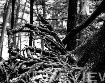 Up-Rooted