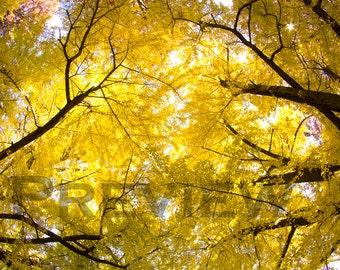 Autumn's Encore