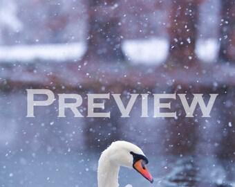 Swan, the Ice Breaker