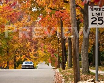 Autumn in the Suburbs