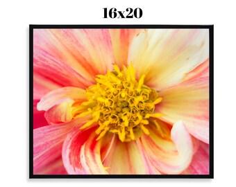 SALE Dahlia - Framed 16x20 Print, Fine Art Photograph, Floral, Spring, Wildlife, Nature