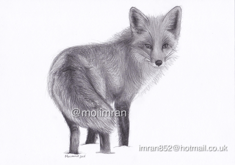 Original au crayon dessin de renard roux la faune animal etsy - Dessin renard ...