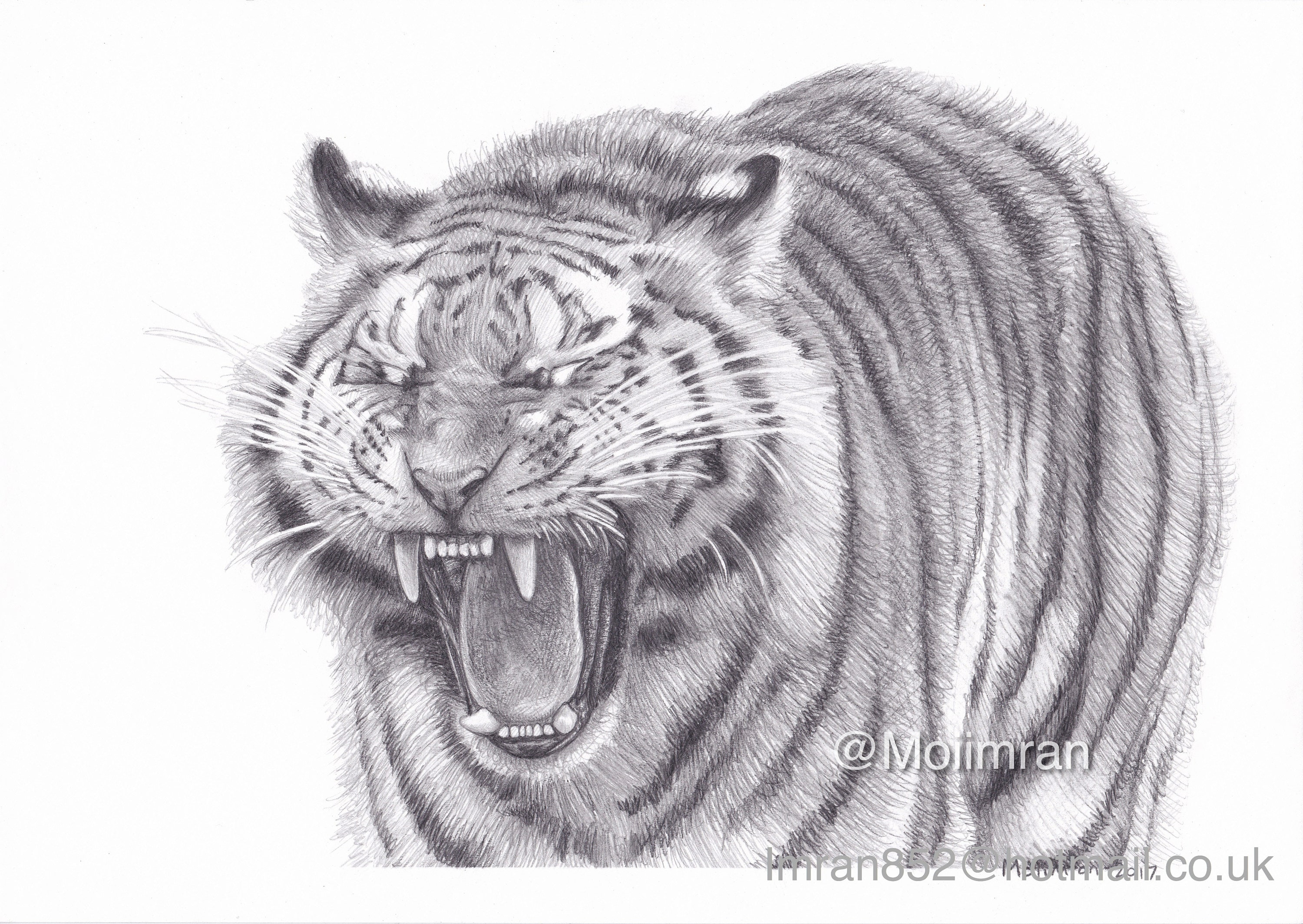 It is a picture of Ambitious Roaring Tiger Drawing