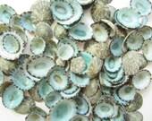 Limpet Seashells-0.5-1 quot -Beach Wedding Decor-Crafting Seashells-Blue Seashell-Green Seashells-Beach Decor-Bulk Seashells-Green Limpet Shells