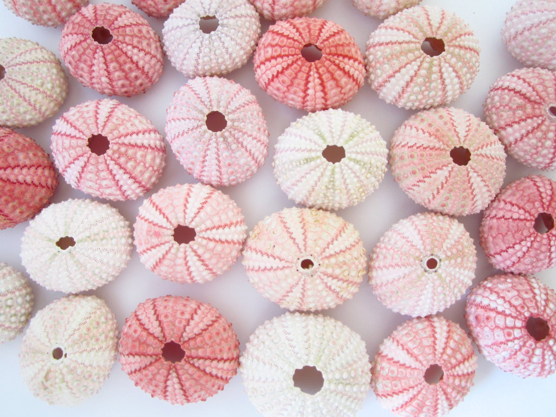 100 Pink Sea Urchins-Beach Wedding Favors-Beach Wedding | Etsy