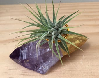 Gold Dipped Crystal Air Plant-Gold Painted Amethyst Plant-Birthday Gift-Wedding Gift-Amethyst Crystal-Air Plant Terrarium-Housewarming Gift