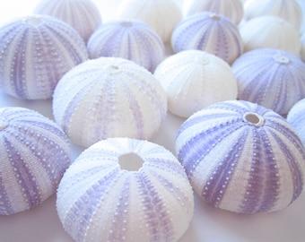 Purple Sea Urchin - Set of 10-Beach Wedding Decor and Favors-Sea shells Bulk-She shells Crafts-Sea Urchin-Beach Decor-Urchin-Beach Crafts