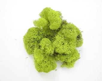 Reindeer Moss-0.5 oz-Plants-Terrarium Supplies-Lime Green Moss-Preserved Moss-Lichens-Soft Moss-Terrarium Moss-Feather Moss-Reindeer Lichen