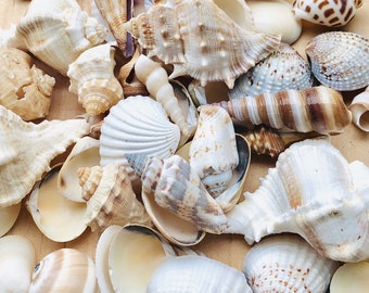 Assorted Sea Shell Mix-Beach Wedding Decor-Sea Shells Bulk-Assorted Seashell Mix-Sea Shells-Sea Shells for Crafting-Beach Decor-Shells Bulk