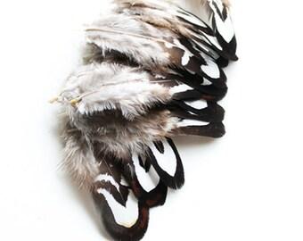 Black & White Reeves Pheasant Plumage Feathers 2-3″ | 10 pcs.