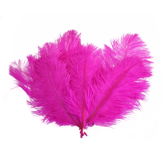 20 Bright Orange Lady Amherst Pheasant Body Plumage Feathers US Seller