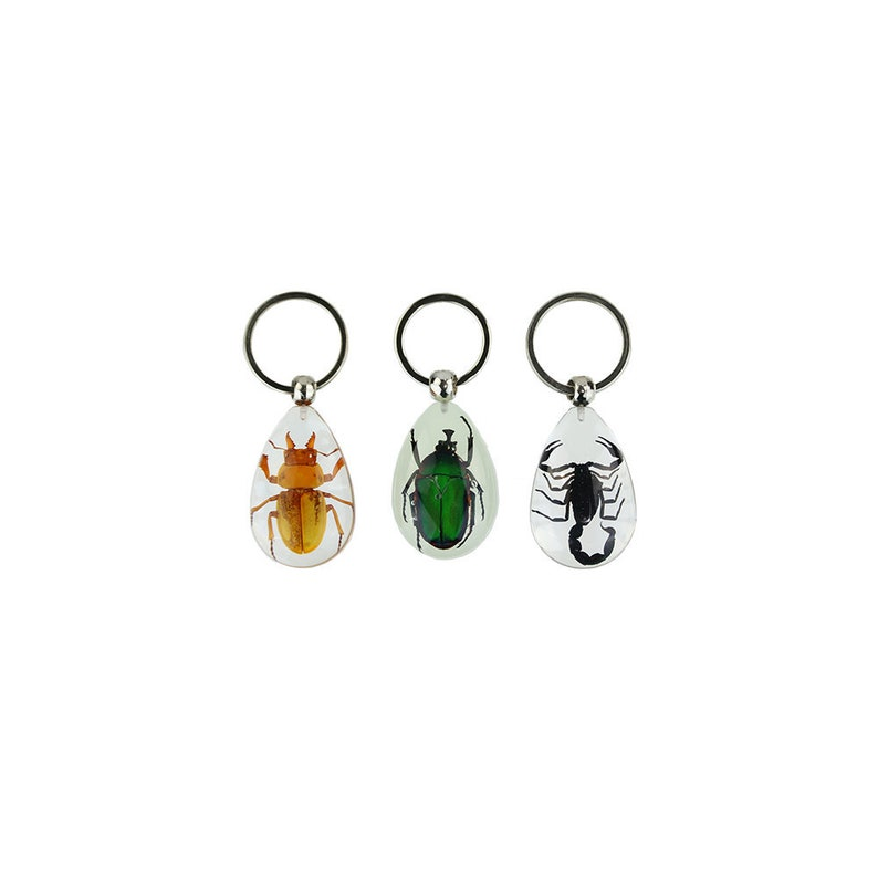 Beetle & Scorpion Taxidermy Keychain Collection | Black Scorpion, Golden  Stag and Unicorn Green Rose Chafer Display Specimen Set