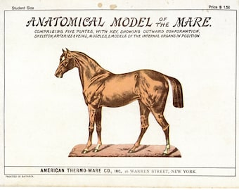 Anatomical Model of the Mare  ( Book  10.5x7.5 )  possibly early 1900s