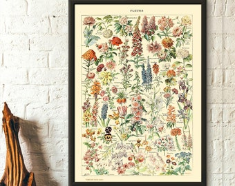 Vintage Flower Print 1909 - Adolphe Millot Poster Home Decor Botanical Print Romantic Floral Illustration Science  Flor Fleur