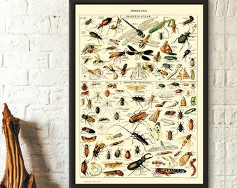Vintage Science Print 1909 - Adolphe Millot Poster Insect Poster Home Decor Larousse Illustrations Gift Idea