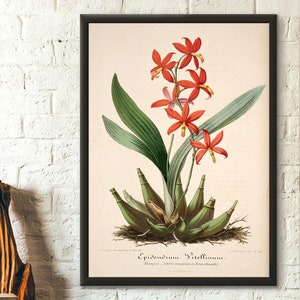Poster Vintage Botanical Print of Violets Viola Tricolor Vintage Botanical Chart Floral Print Christmas Gift for Mom