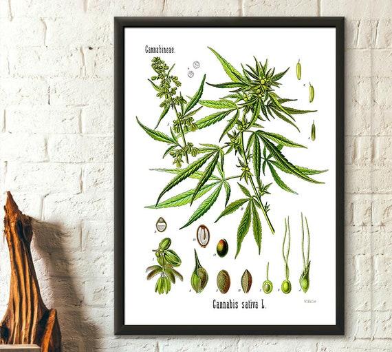 Cannabis Sativa Marijuana Hemp Posters 12 Print Set Botanical Art Print
