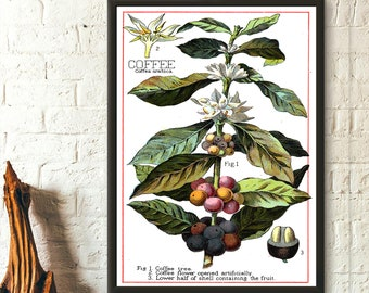 Vintage Coffee Plant - Botanical Poster Vintage Kitchen Decor Food Poster Coffee Poster Birthday Gift Idea Housewarming Botanical Wall Art