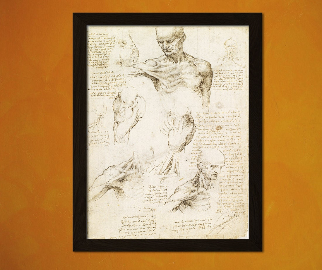 Da Vinci Anatomical Drawing Print Medical Decor Human Anatomy Home