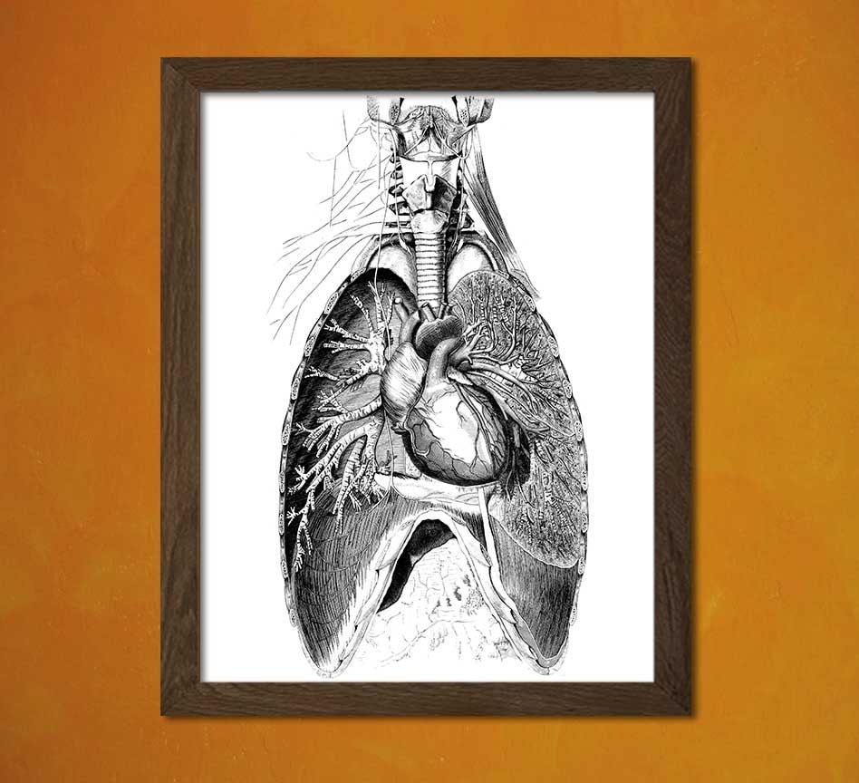 Vintage Anatomical Prints Medical Decor Human Anatomical Vintage