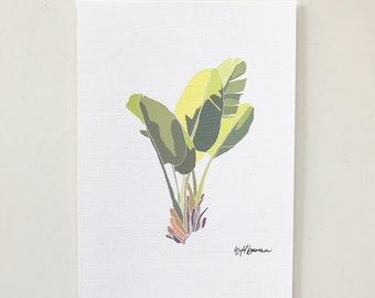 Wild Banana Plant Illustration