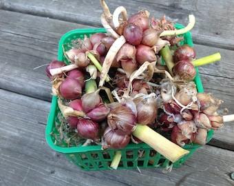 Valeyrac Seeds