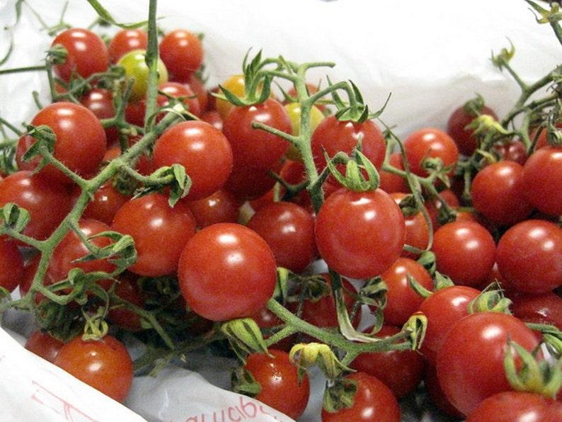 Matt/'s Wild Cherry Tomato 5 seeds
