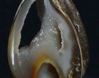 Polished Agatized Gastropod Fossil Slice, India - Mineral Specimen for Sale