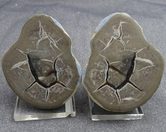 Cut and Polished Septarian Nudule, Morocco, Mineral Specimen for Sale