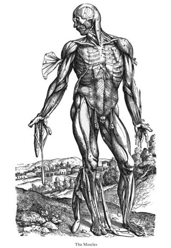 ML30 Anatomía médica Vintage ilustración músculos frontal | Etsy