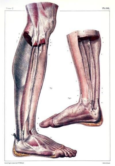 ML29 Vintage 1800 cuerpo humano anatomía médica pierna y del | Etsy