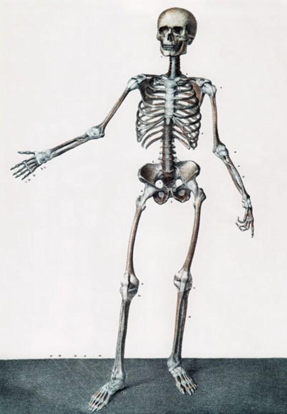 ML04 Médico quirúrgico cartel esqueleto completo humano volver | Etsy