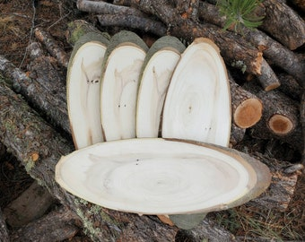 Large Oval Wood slab, blank wood sign, Natural tree slabs, oblong live edge tree slice, long board, taxidermy mounting plaque, wood slices