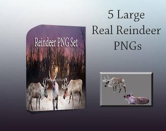 Reindeer Overlay, Real Reindeer PNG, Sale, Christmas Overlay, Reindeer Cut outs, Large Reindeer Png, Photoshop Overlay, Stock Reindeer