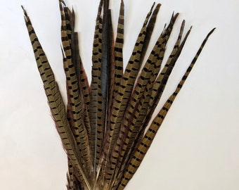 DISCOUNTED Pheasant Feathers - Long Male Tail Feathers - Natural Color - Damaged