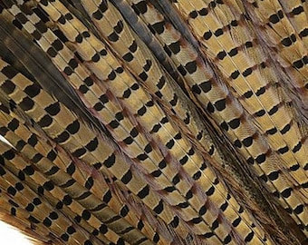Pheasant Feathers - Long Male Tail Feathers - Natural Color