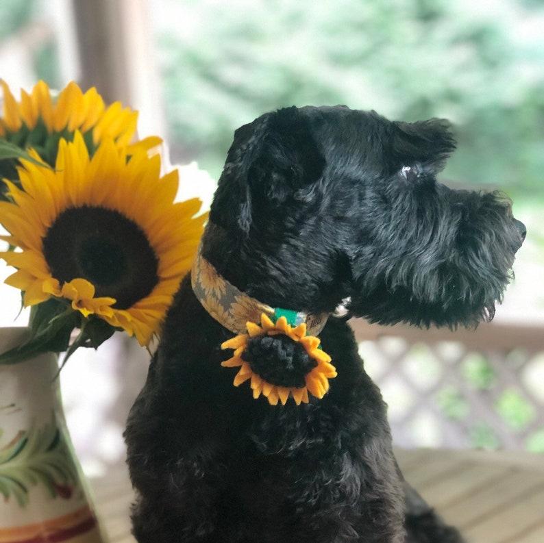 Sunflower Felt Floral corsage for Dog or Cat Collars  Wedding image 0