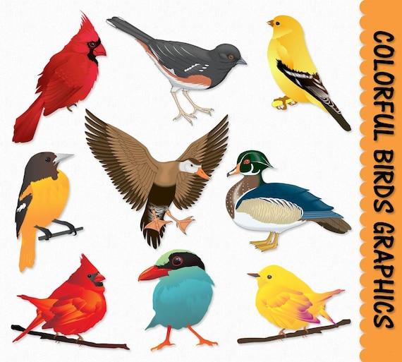 Free Bird Clip Art - Beautiful Bird Clipart Colorful, HD Png Download ,  Transparent Png Image - PNGitem