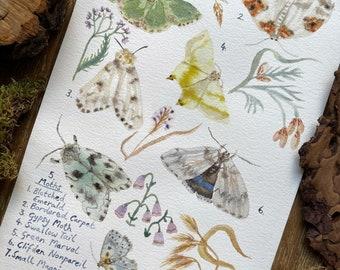 Moths – A4 print