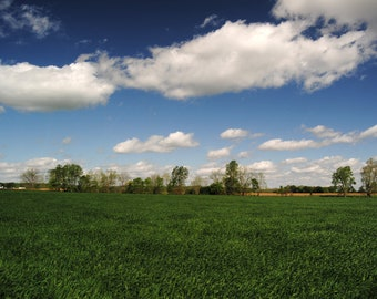Country Field - Photo Print - Blue Sky