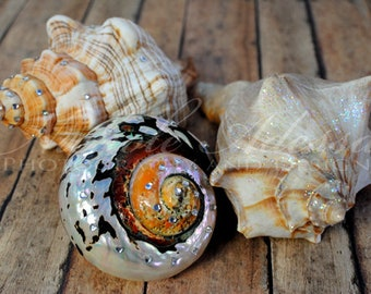Sea Shells - Wall Art - Photo Print
