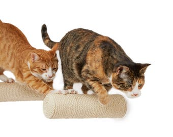 Sisal post * Climbing step * Scratching post * Floating step * Bracket-less post * Sisal scratcher * Cat furniture * Cat playground *Cat toy