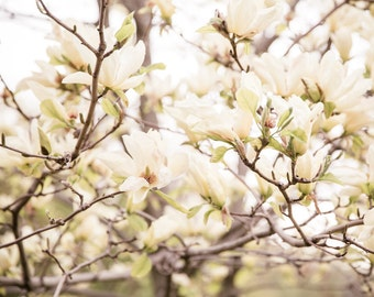 Flower Photography, Spring Blooms, Neutral Wall Art, White, Cream, Large Wall Art, Nature Photography, Nature Art Print, Flowers, Blooms
