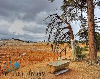 Original photo - Tree Over Bryce Canyon