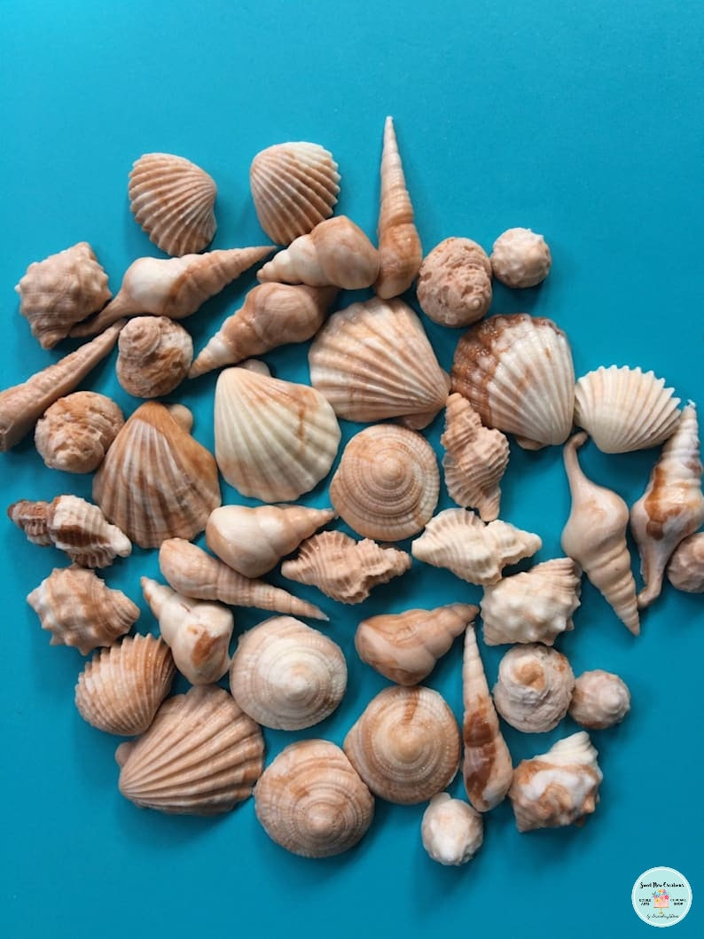 Sea Shell fondant topper 50pcs Beach cake topper beach cupcake image 0