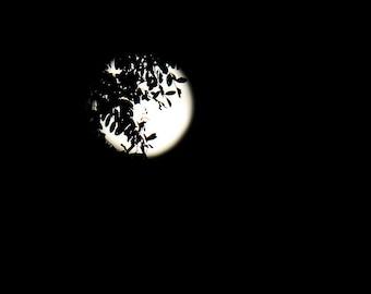 Full Moon Photograph,Photo of Moon at Night,Black and White Wall Art,Moon Photograph,Night Moon Photography,Black and White Moon Photograph