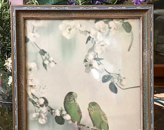 Peinture Vintage Perruche avec cadre de Style Art déco