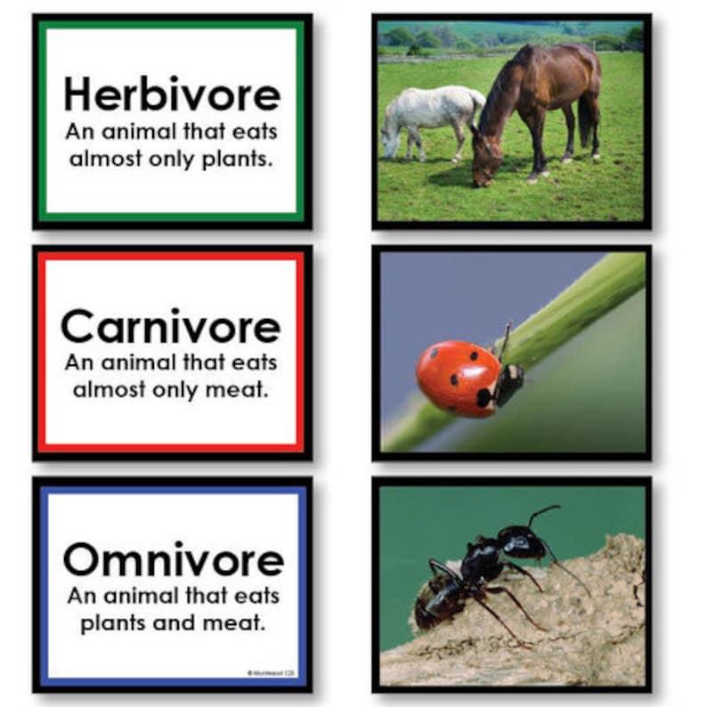 Herbivore Omnivore Carnivore Sorting Game image 0